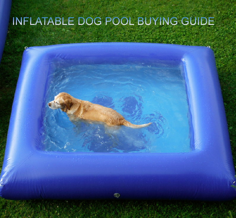 INFLATABLEDOG POOl